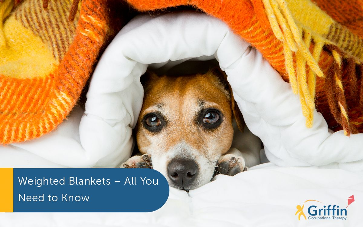 dog under a blanket text weighted blankets all you need to know