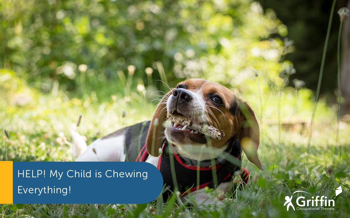 dog chewing a stick and text Help my child is chewing everything